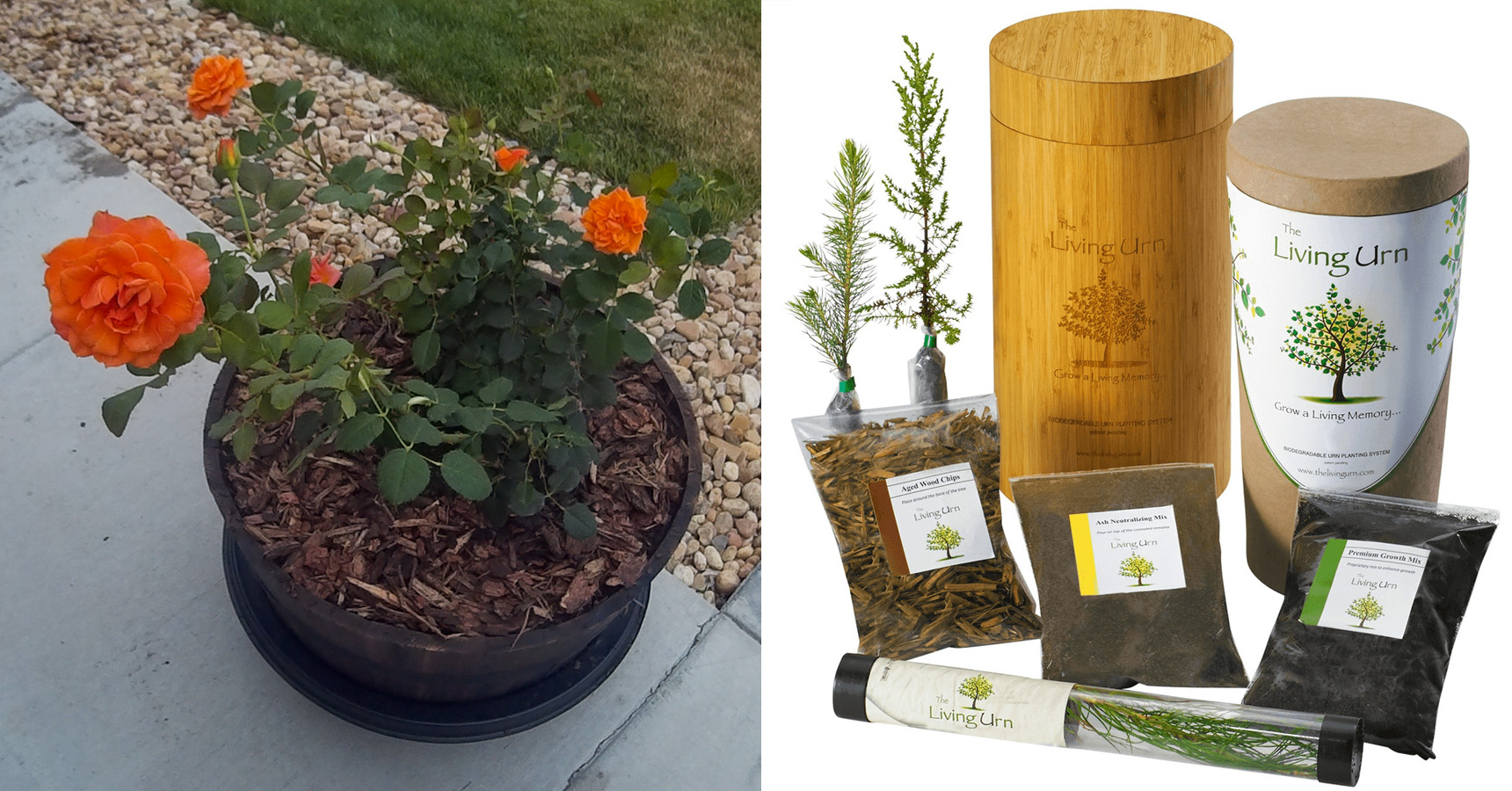Celebrate New Life With A Biodegradable Urn 5280