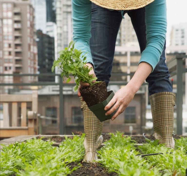 herb-gardening