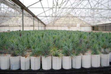 CSU seedling nursery