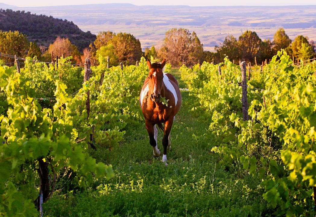 Le-Roux-Vineyards