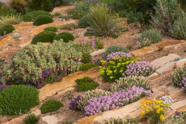 Denver Botanic Garden rock garden