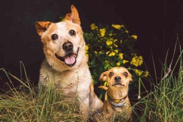 Two-Dog-Portrait