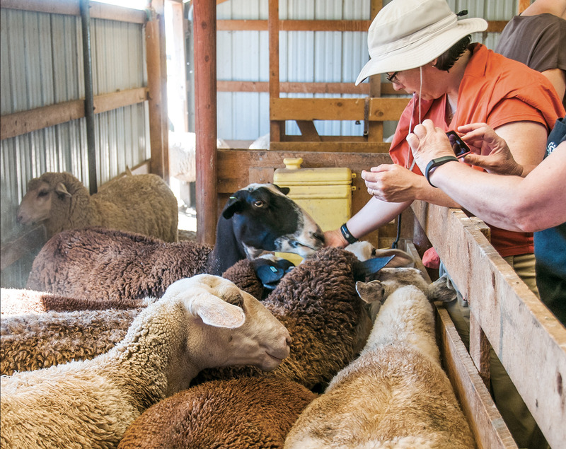 Living-Farm-Goats