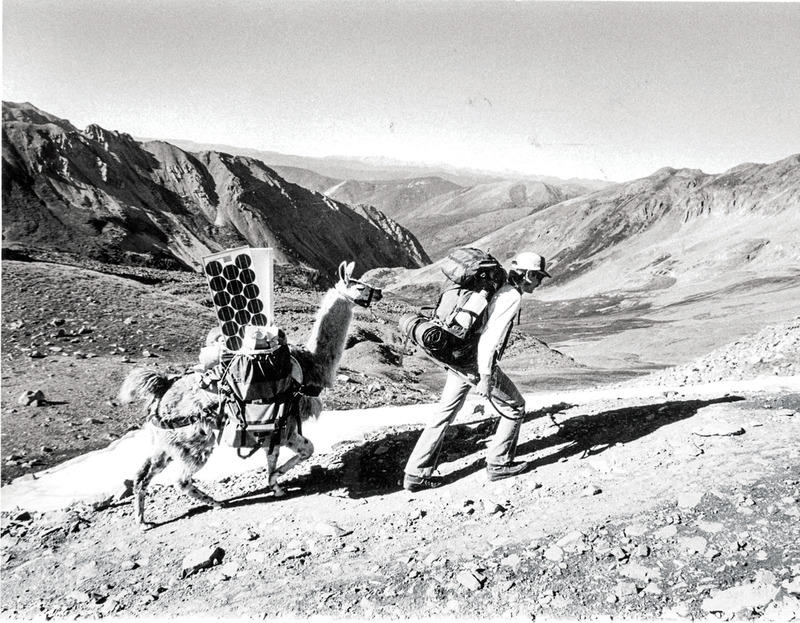 Llama Colorado Mountain College