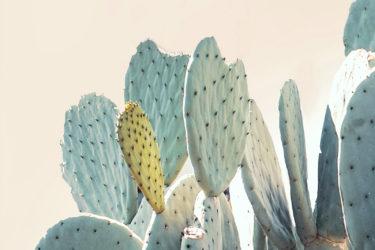 blue-cactus-closer