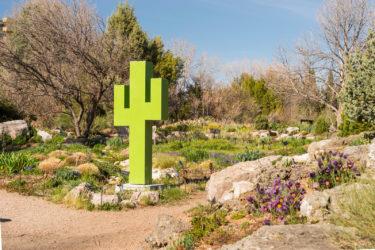 whiting cactus