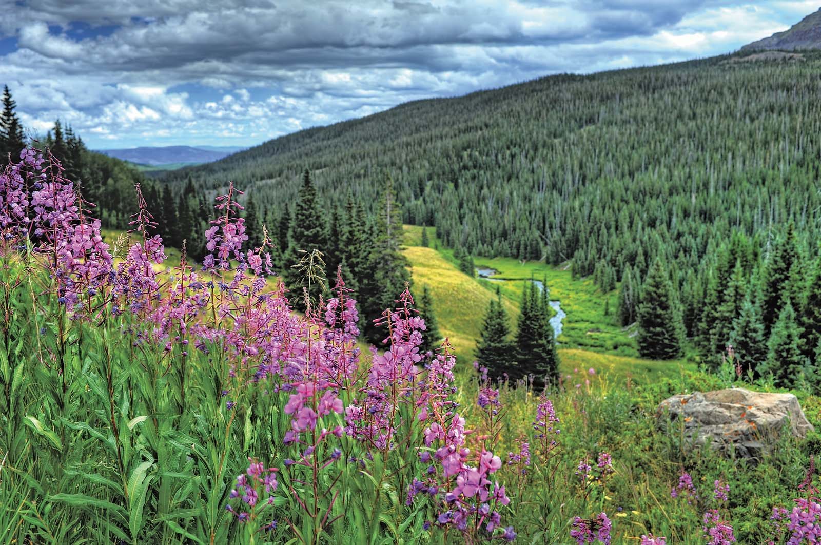 A Guide To Colorado S Spectacular Wildflower Season 5280