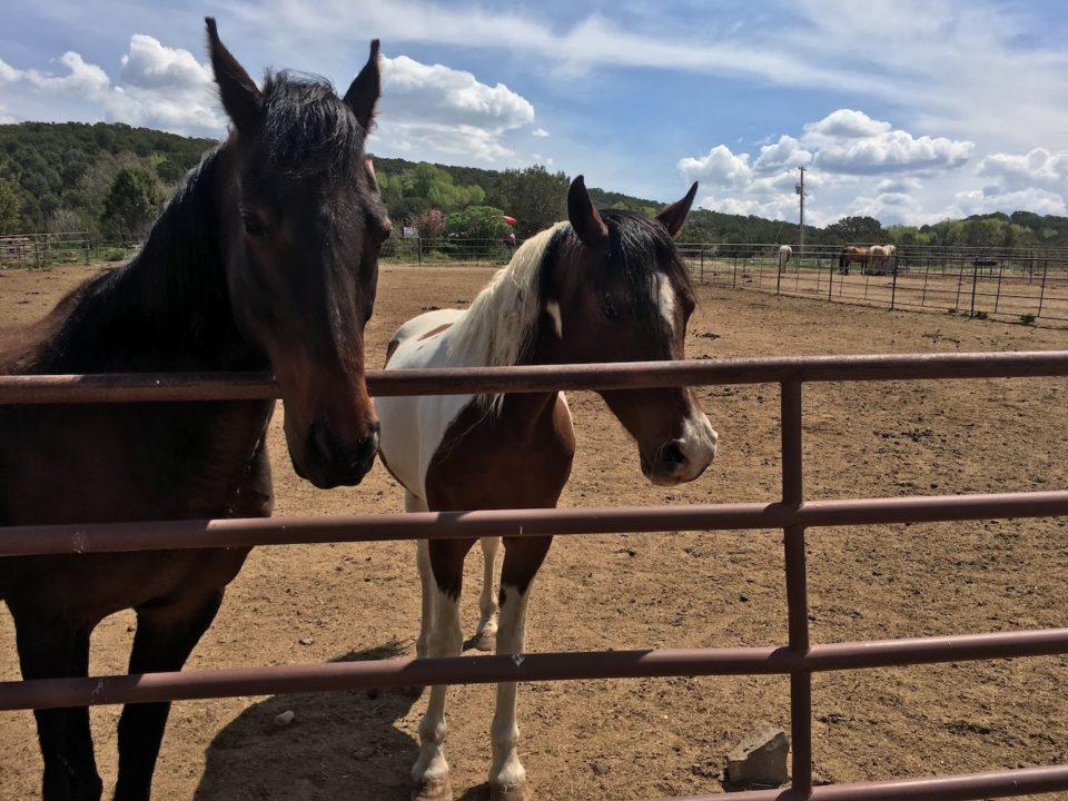 Horses, Cedar Ridge Ranch