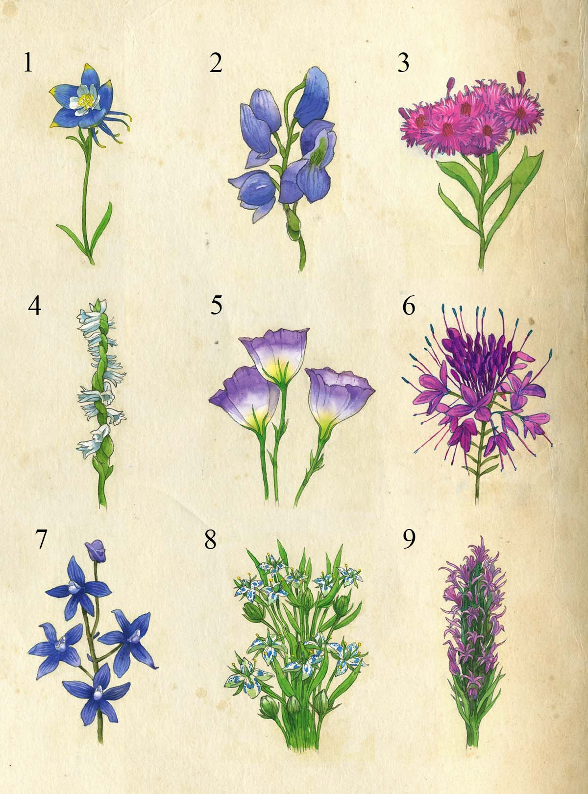 A Guide To Colorado S Spectacular Wildflower Season 5280