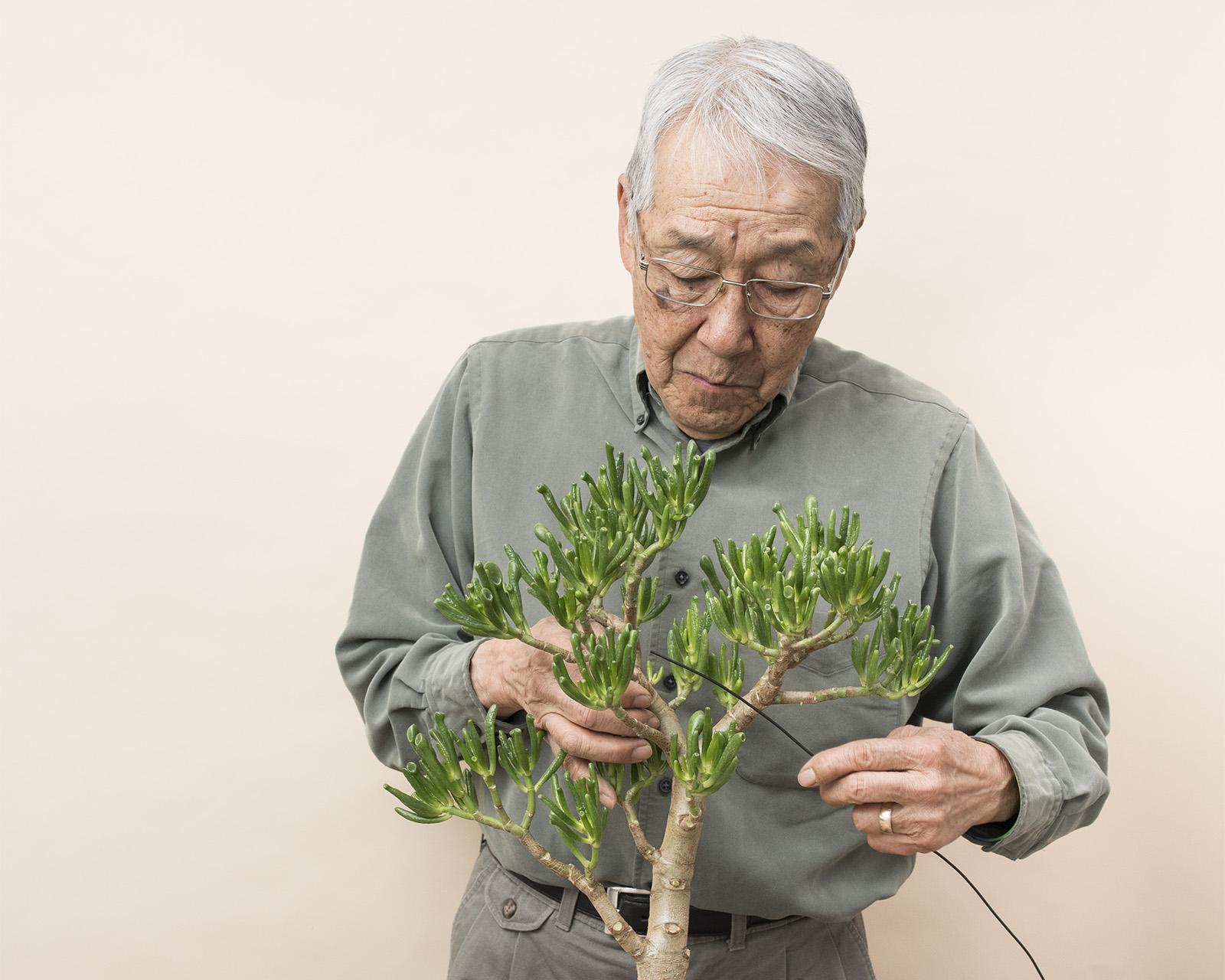 How To Train Your Bonsai Tree 5280