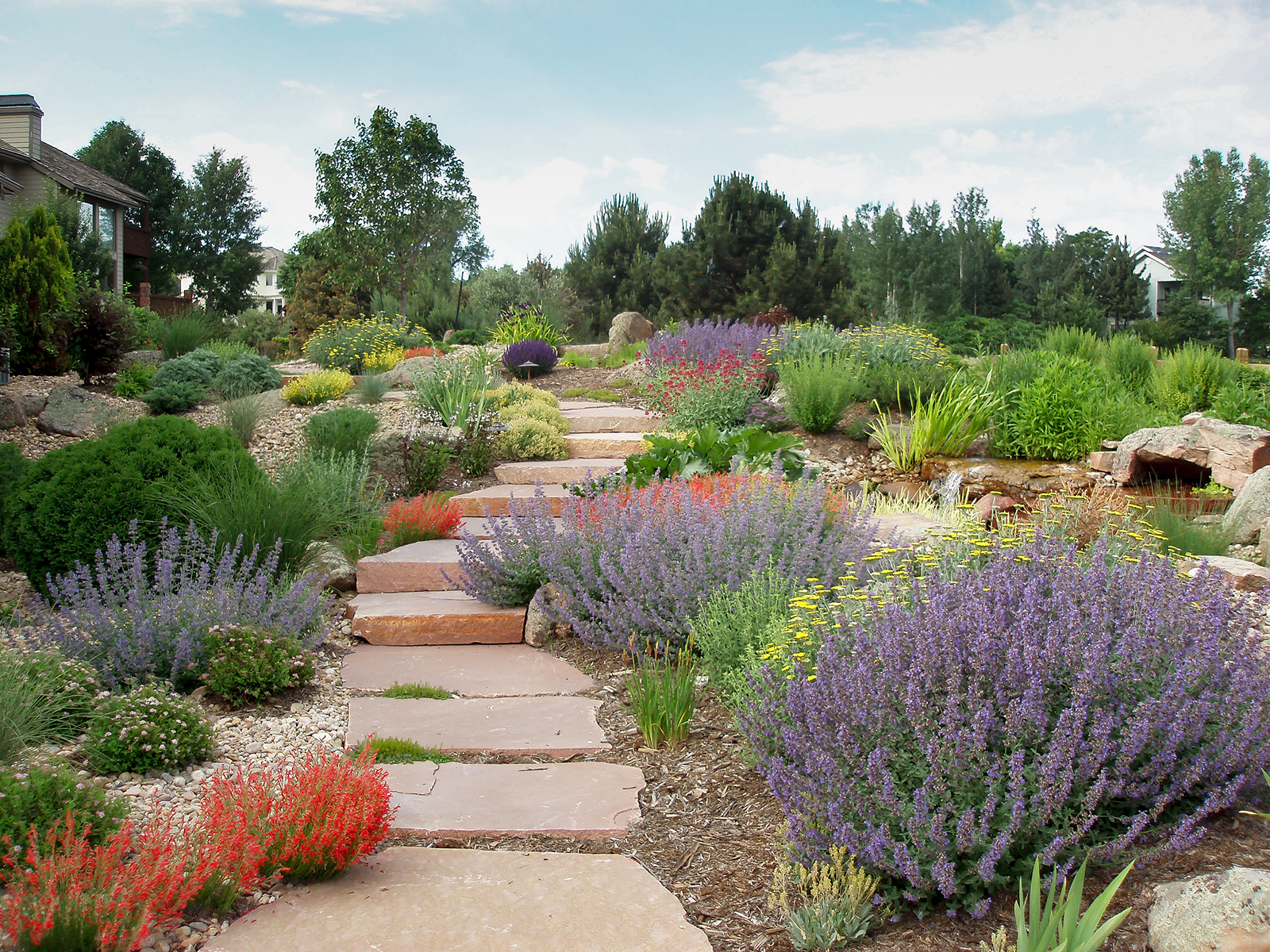 The Beginner S Guide To Xeriscape In Denver 5280