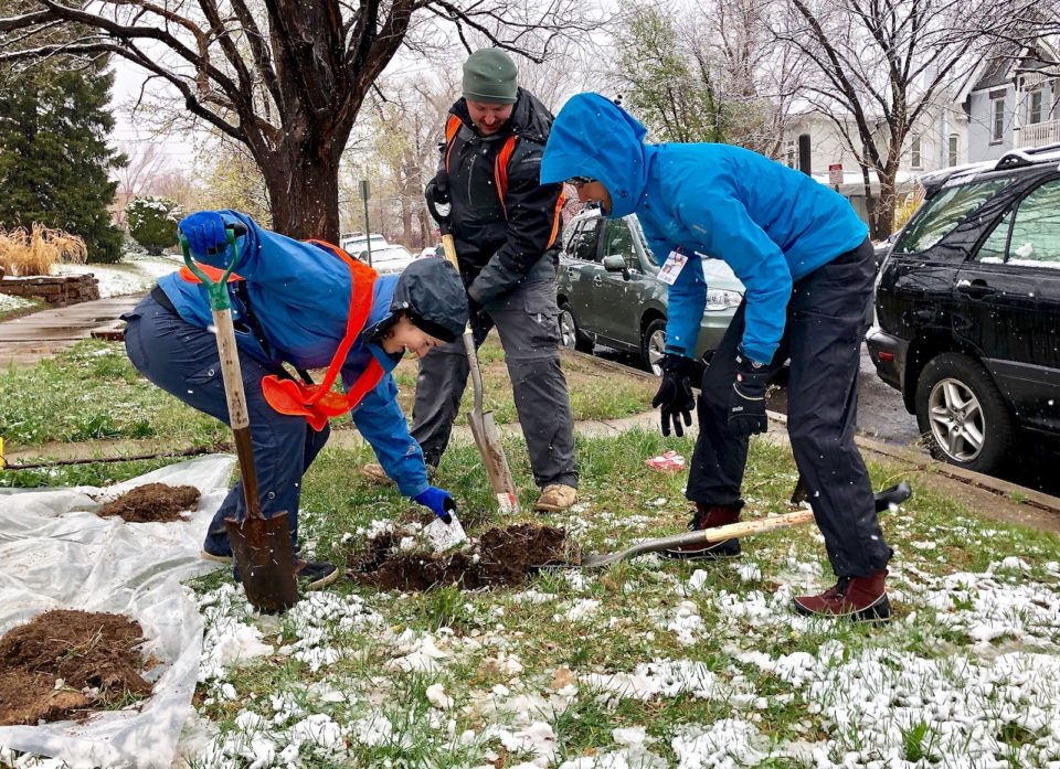 The Park People plant tree in the snow