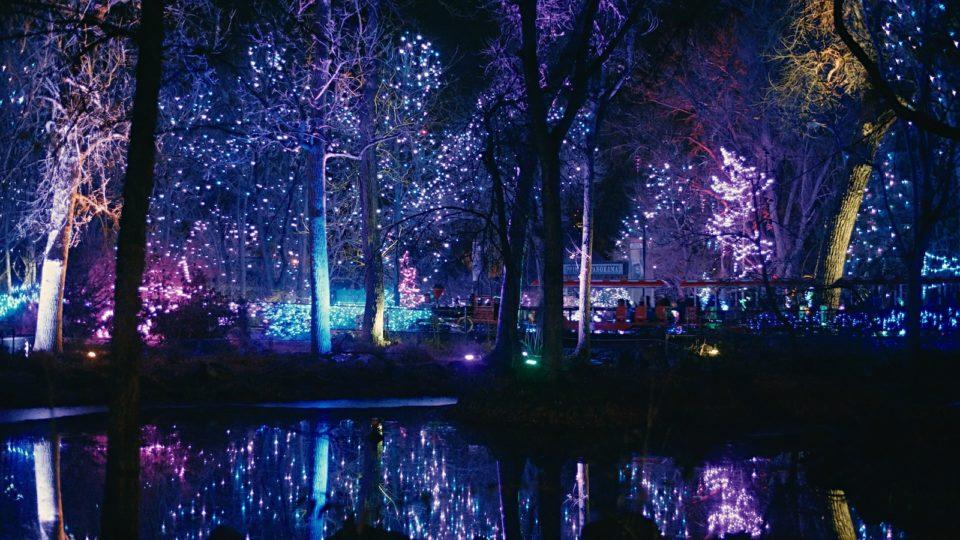 Denver Zoo Low Sensory Night New Years Eve