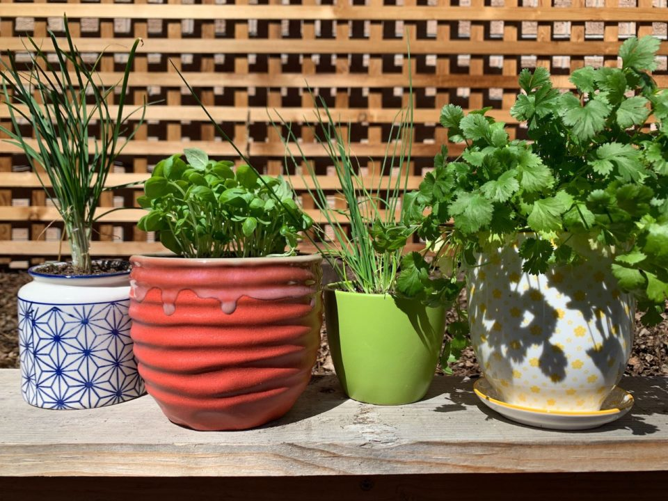 Plant your own herb garden, like the author, now.