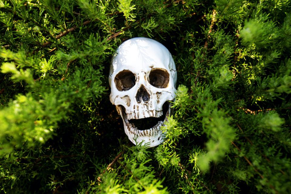 Skull in bush