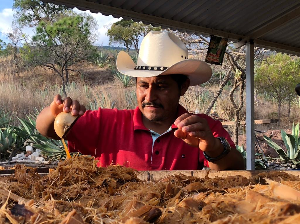 Ángel Robles taking a sample of fermented agave to test specific gravity