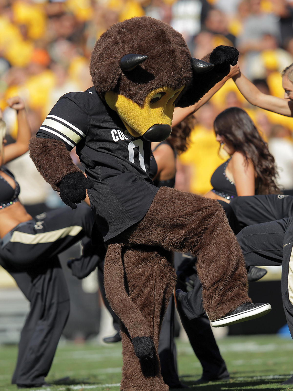 Colorado Boulder's Chip the Buffalo