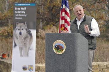 David Bernhardt delists gray wolves