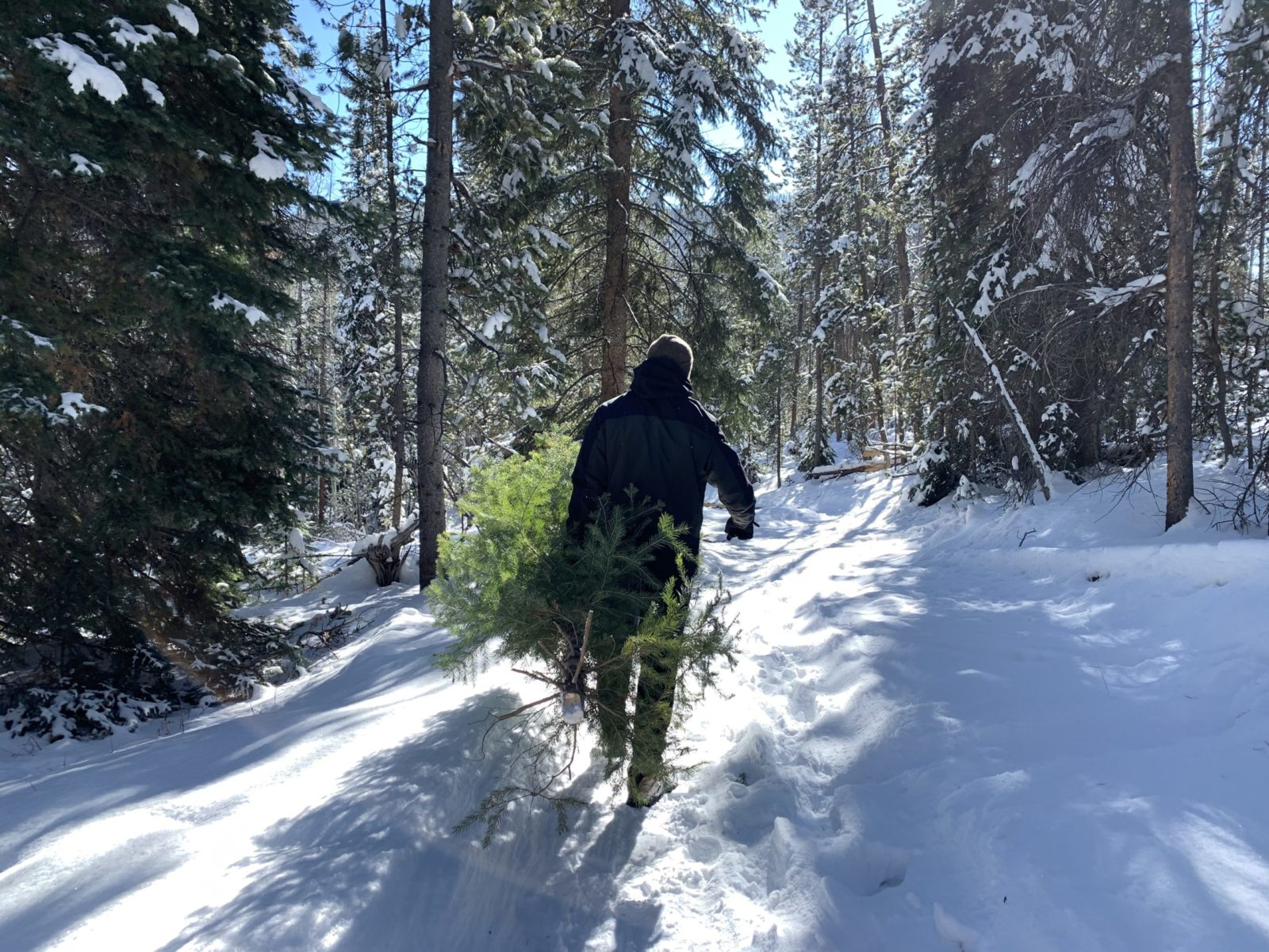 Where to Cut a Christmas Tree in Colorado's Forest 2020
