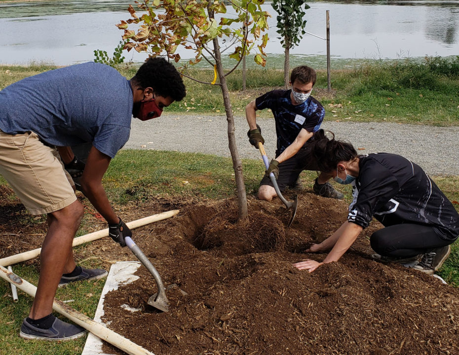 People plant a tree for The Park People's Denver Digs Trees