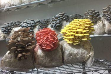 Mile High Fungi