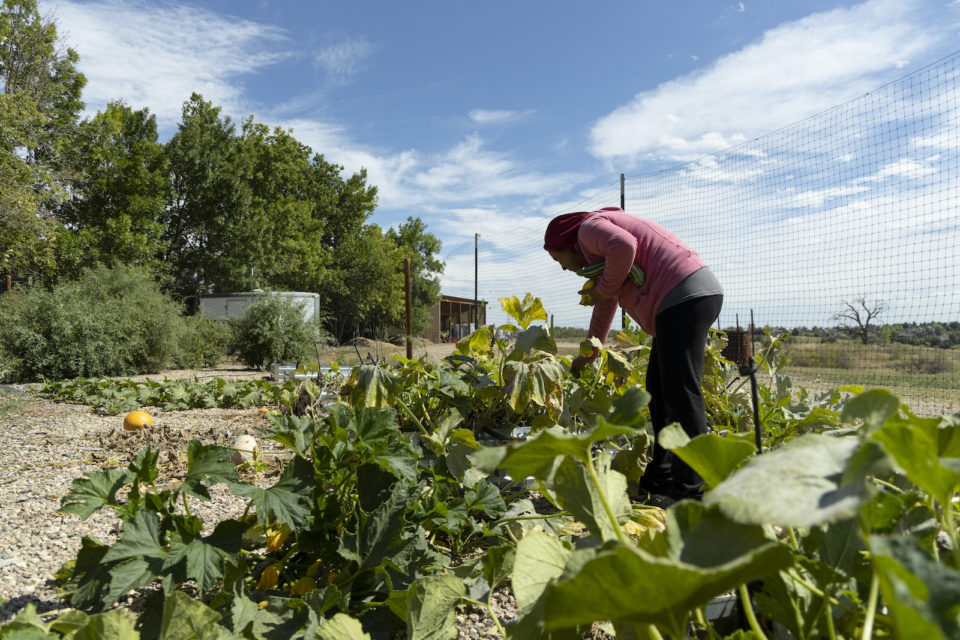 A member of the Hispanic Women's Farming Proyecto