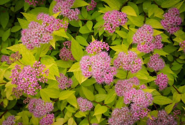 6 Low Maintenance Plants For The Front Range 5280
